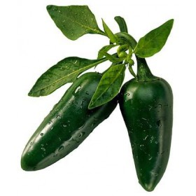 بذر فلفل هالوپینو یا فلفل مکزیکی تند جالاپنو  Jalapeno Chilli Pepper Seeds