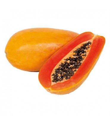 بذر پاپایا واریته هلند | papaya varieties holland seed