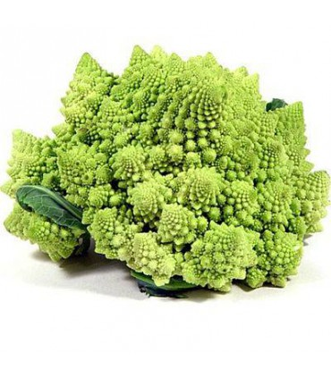 بذر کلم بروکلی رومانسکو رومی (Romanesco broccoli)
