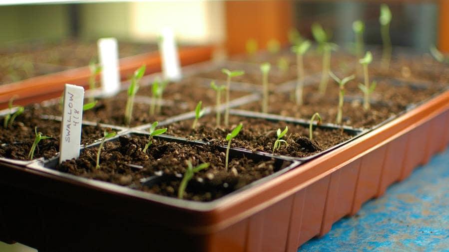 راهنمای بذر و تخم گیاهان