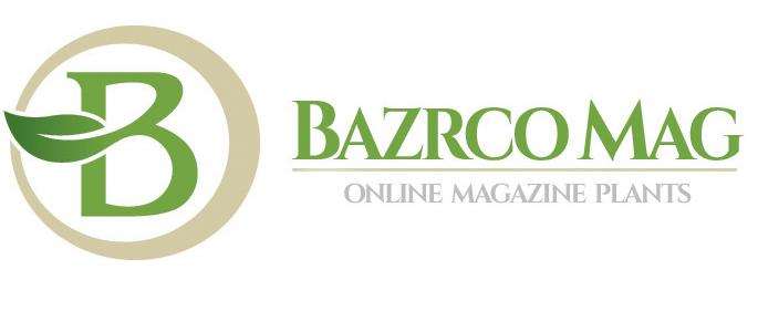 مجله آنلاین بذرکو
