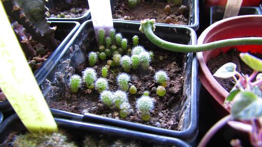 آآموزش کاشت بذر کاکتوس