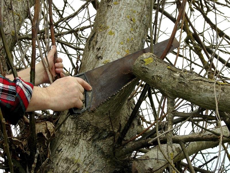 عکس از چوب درخت گردو