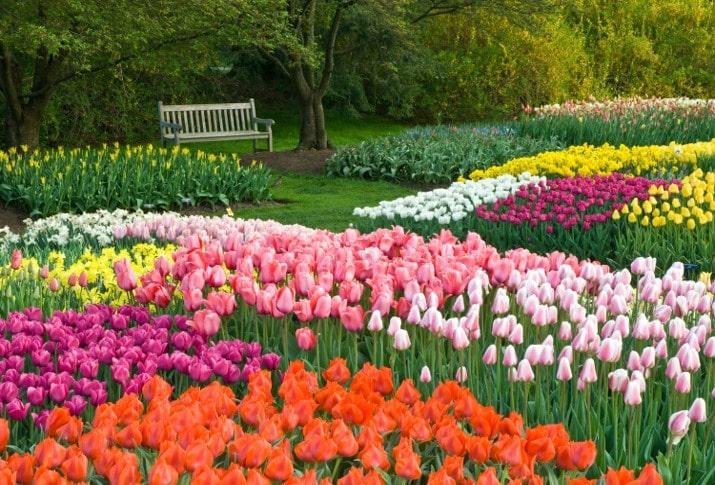 انواع گل های رنگارنگ لاله