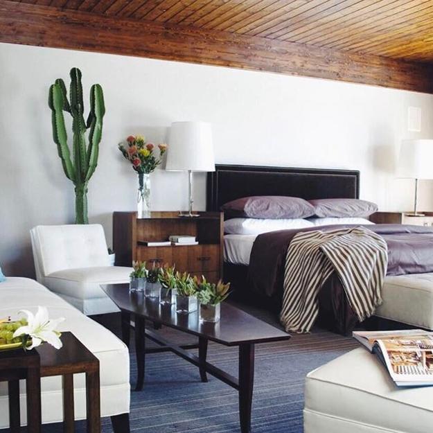 دکوراسیون زیبا از یک منزل با گلدان های کاکتوس