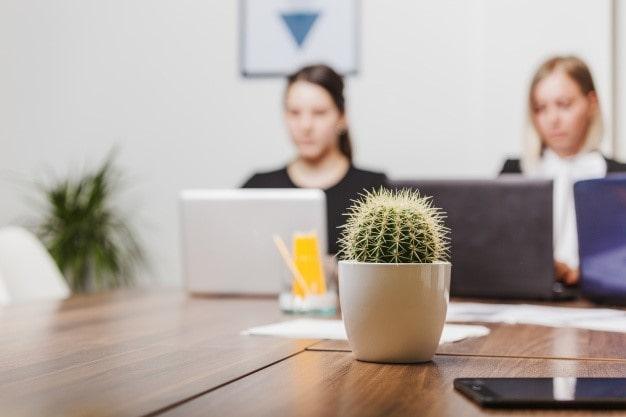فواید نگاهداری کاکتوس در محل کار