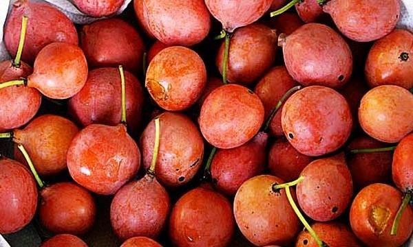 میوه ایمبه Imbe