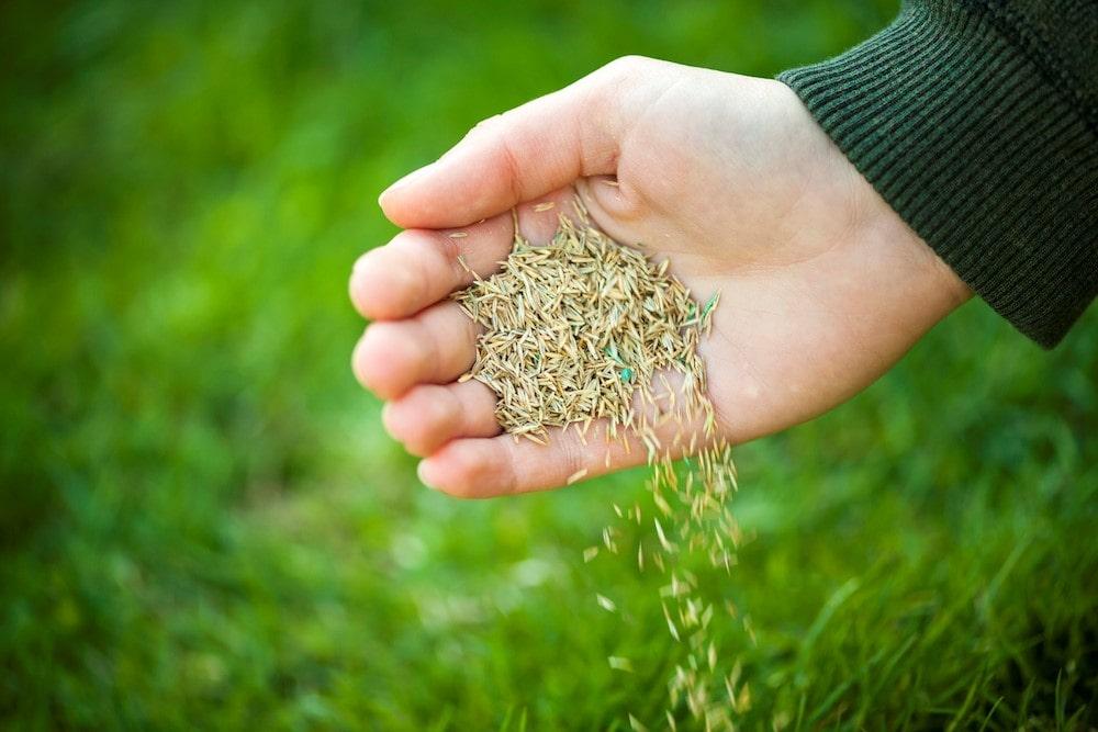 اولین قدم در کاشت بذر چمن