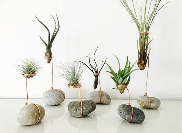 گیاهان هوازی