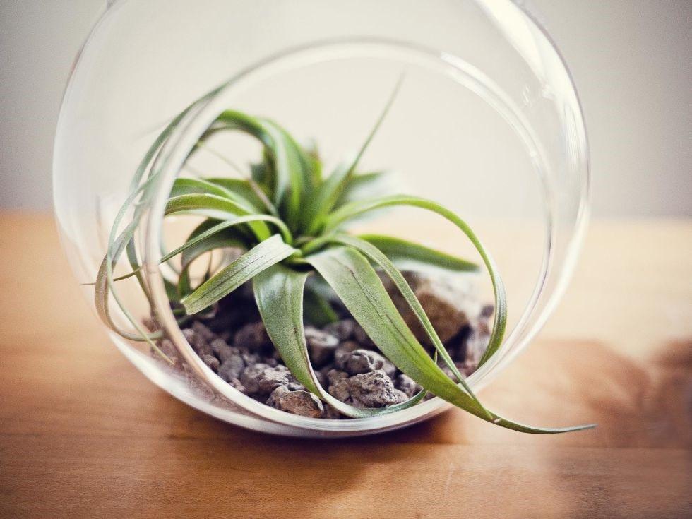 پرورش گیاهان هوازی