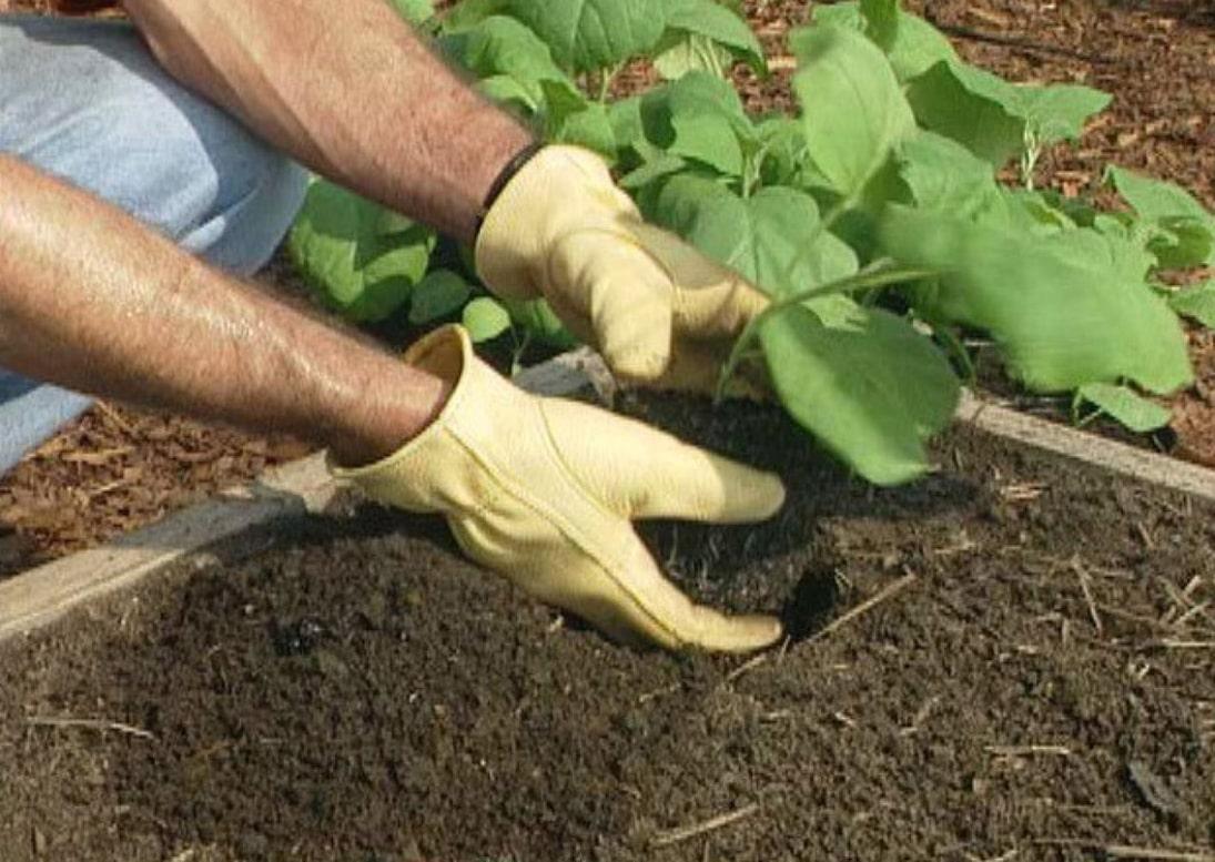 آموزش کاشت بذر بادمجان