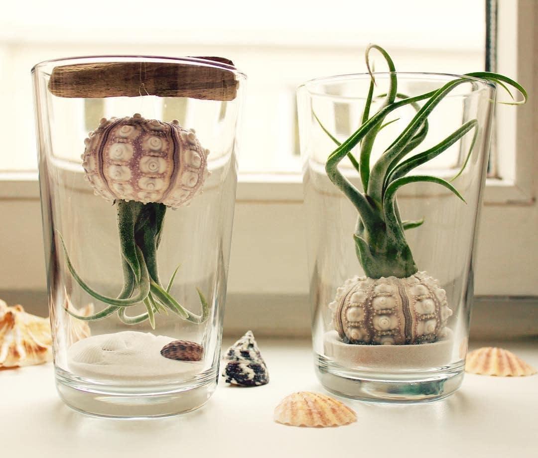 تراریوم گیاهان هوازی