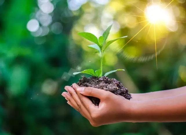 گیاهان برای تداوم حیات ما